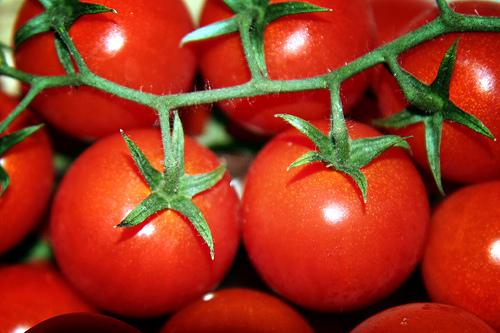 Risultati immagini per pomodori