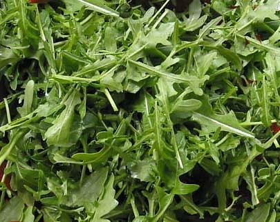 Rucola brogioni le mosse ortofloricoltura for Piante classificazioni inferiori successive