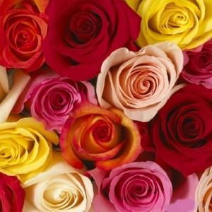 rosa-mix